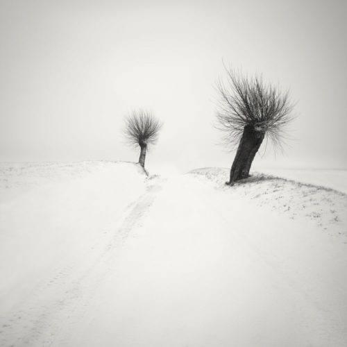 HakandStrand_4_fotografia_invierno_paisaje_belleza_PoesiaVisual_estimulante_StillMoments_BlancoYNegro