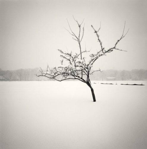 HakandStrand_7_fotografia_invierno_paisaje_belleza_PoesiaVisual_estimulante_StillMoments_BlancoYNegro