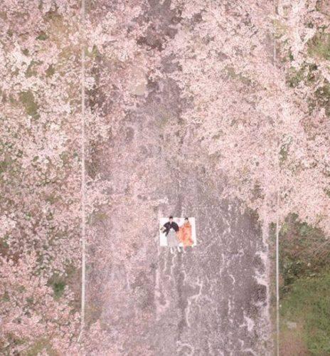 Rei-Hanada_3_Japon_Tokio_primavera_flores_cerezo_naturaleza_dron